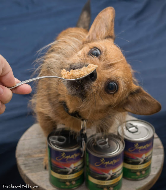 Mini Review: Zignature Canned Dog Food