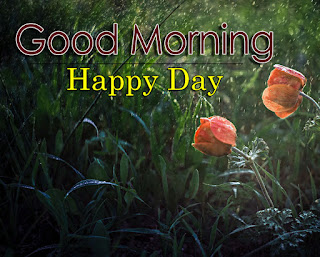 New Good Morning 4k Full HD Images Download For Daily%2B81