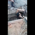 Adolescente entra em tubulação de esgoto para resgatar cão