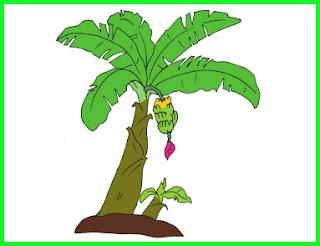 materi pelajaran kelas 6 sd tema 1 perkembang biakkan vegetatif