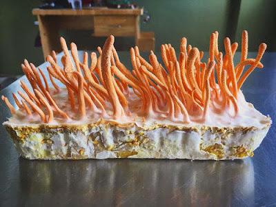 Cordyceps Mushroom Company in Andhra Pradesh