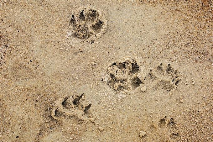 Świadome żywienie psa z Psiastki