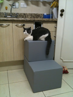 gatos na petescadas