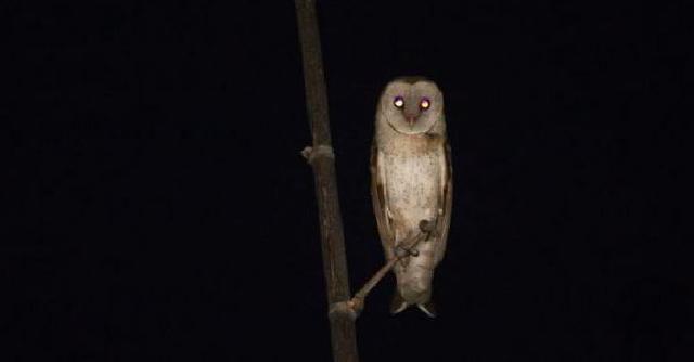 80  Gambar Burung Hantu Di Malam Hari  Terbaru