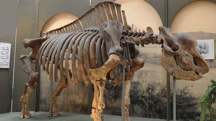 Fosil Unicorn Siberia