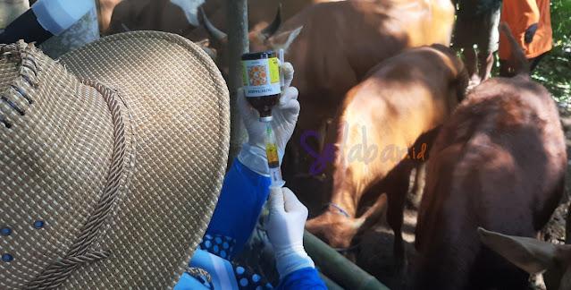kerjasama ternak sapi, sapi banyuwangi, ekonomi banyuwangi, titip ternak sapi, bisnis sapi, investasi sapi, usaha ternak sapi, usaha sapi, keuntungan ternak sapi, cara beternak sapi, penggemukan sapi potong, usaha penggemukan sapi, usaha ternak sapi manual, bisnis ternak sapi, bisnis penggemukan sapi, investasi sapi perah, bisnis sapi perah, bisnis sapi potong