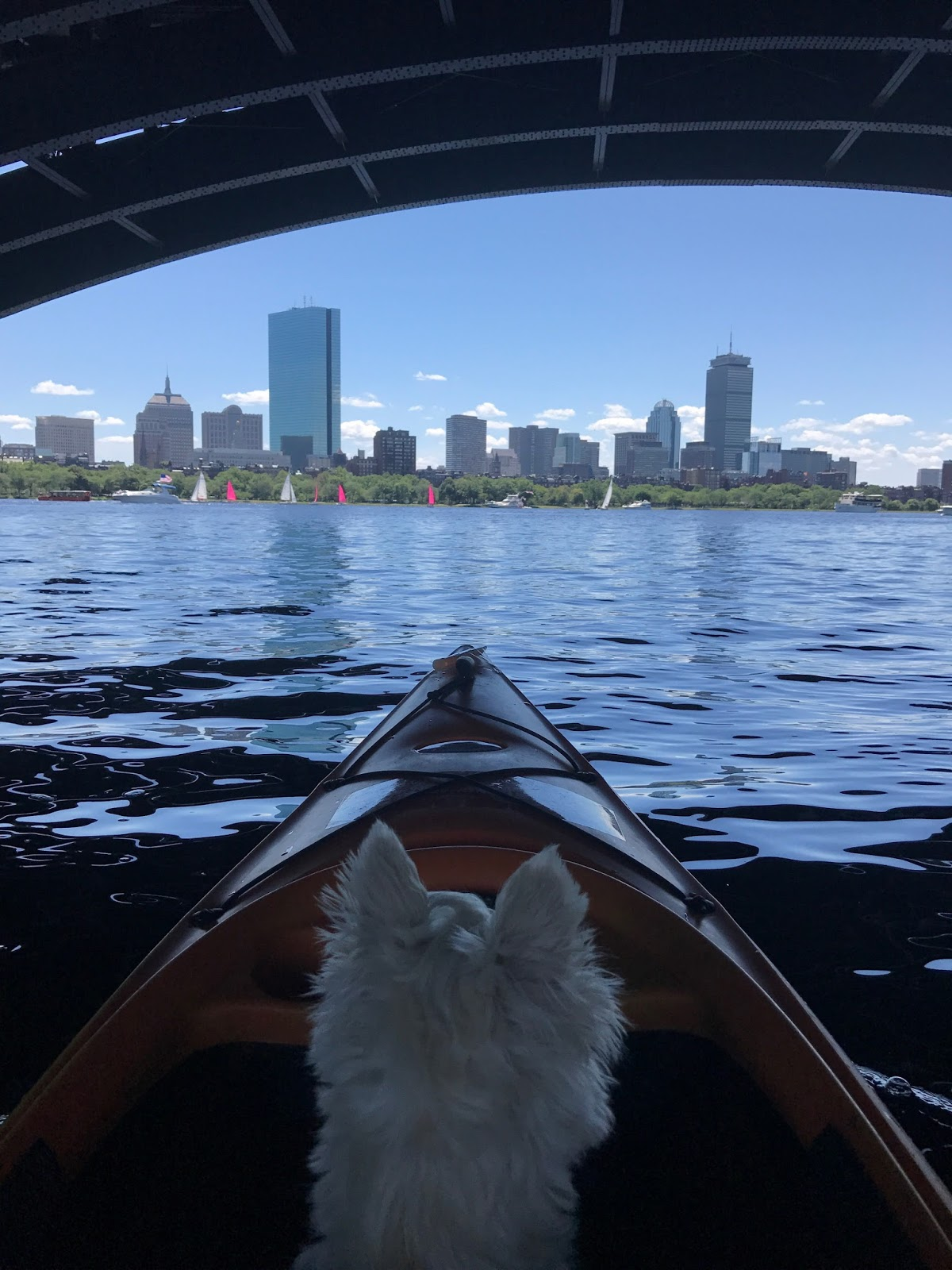 kayak boston charles river