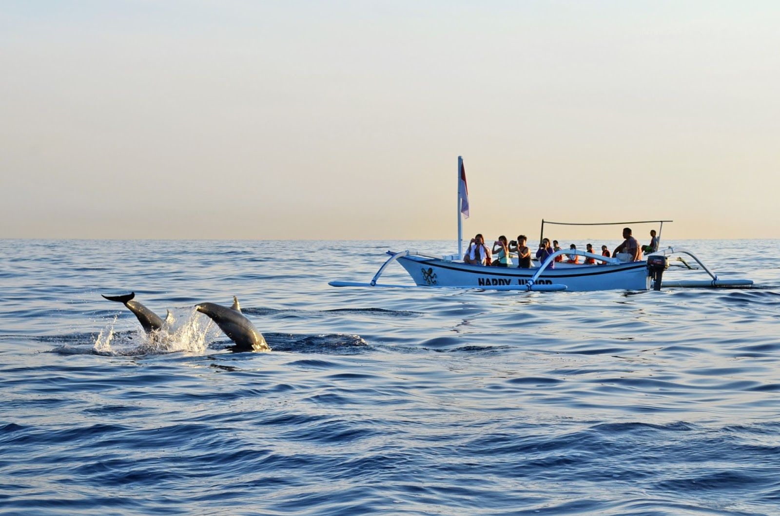 bali indonesia 2014 dolphins watching lovina beach just an