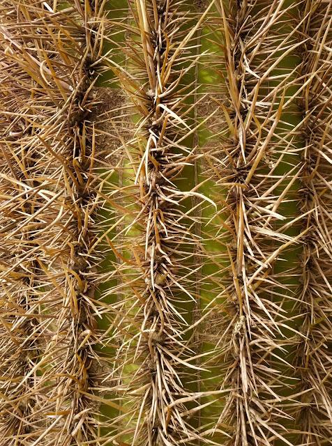 Textura Cactus del Salar de Uyuni