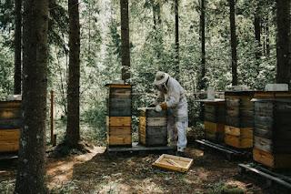 ΔΑΟΚ ΠΕ Μεσσηνίας: Μέχρι 31/12 οι αιτήσεις – δηλώσεις από τους μελισσοκόμους