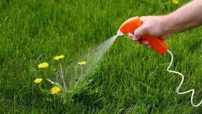 Spraying weed