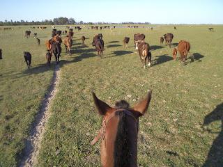 argentiina, ritta reissaa, horsexplore