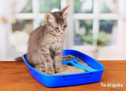 Jak nauczyć kota czystości?