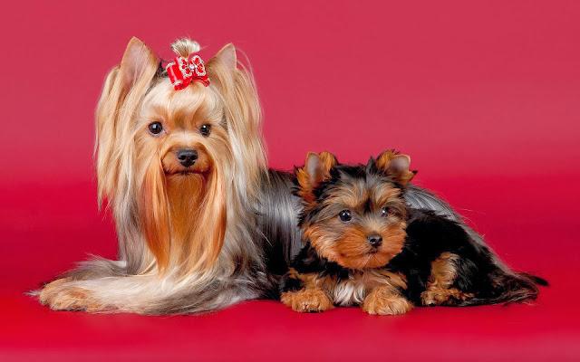 Twee honden samen poseren voor de camera