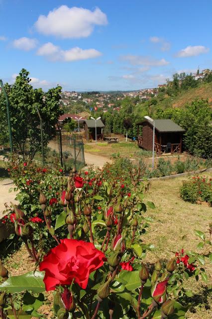 İstanbul hobi bahçeleri