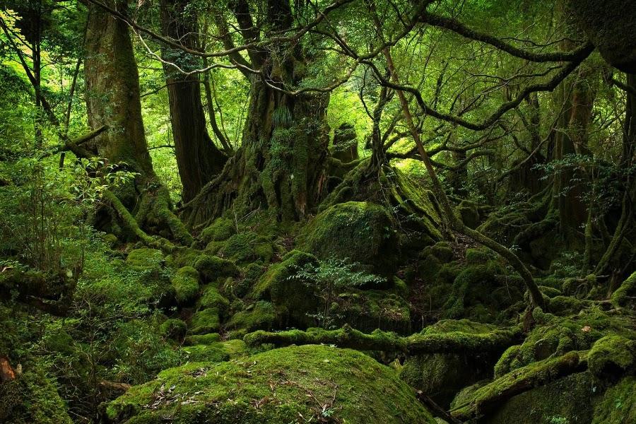bosque-aokigahara-pelicula