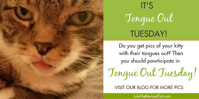 tongue out tuesday|cat tongues