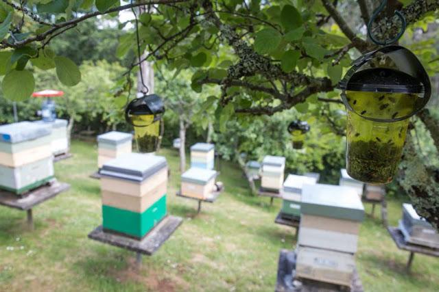 apicultores gallegos piden armas biológicas