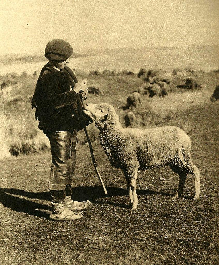 Resultado de imagen de el niño de mula