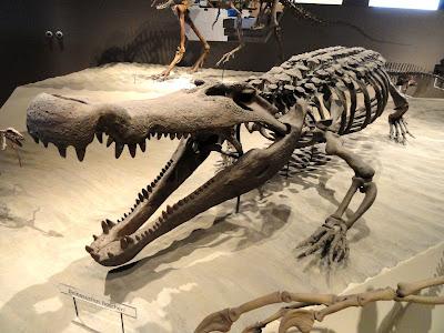 Esqueleto de Deinosuchus