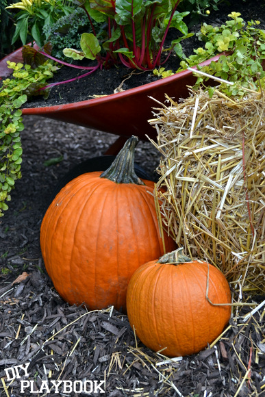 pumpkins: Wheelbarrow Planter | DIY Playbook