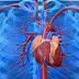 Descoberto como o coração inicia seu desenvolvimento embrionário!