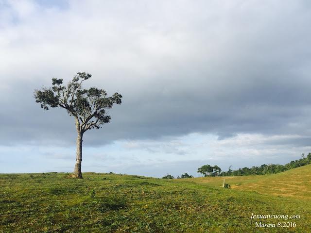 Những ngọn đồi ở Masara luôn đẹp và ảo diệu.