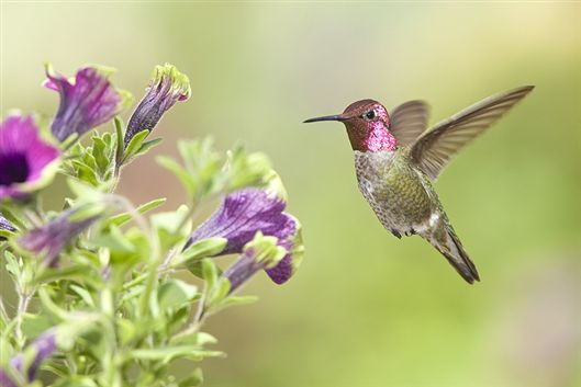 Dr Dan S Garden Tips Attracting Hummingbirds