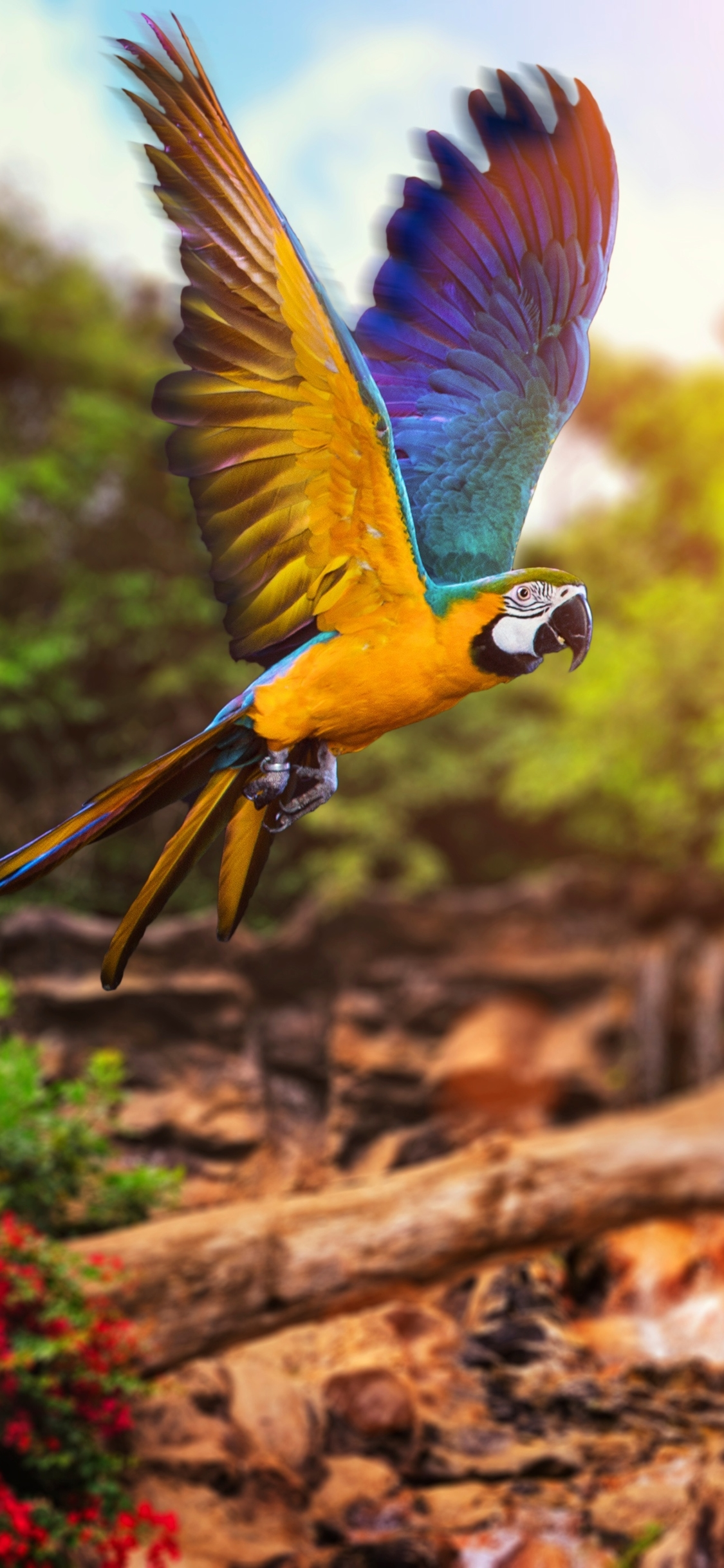 Macaw Fly