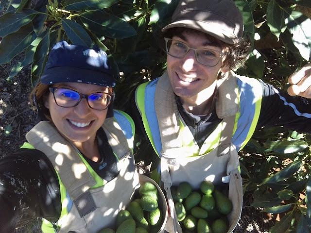 lavorare in farm in australia