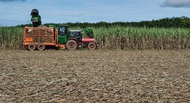 O Brasil cancelou a proibição de 10 anos de cultivo da cana-de-açúcar na Floresta Amazônica