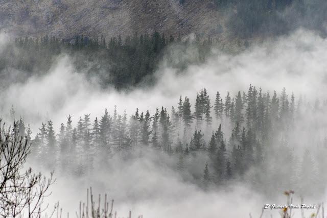 Niebla en el Parque Natural Gorbeia por El Guisante Verde Project