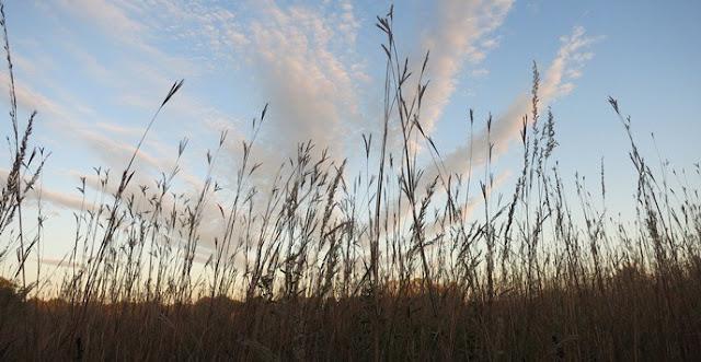Prairies: Temperate Grasslands of North America