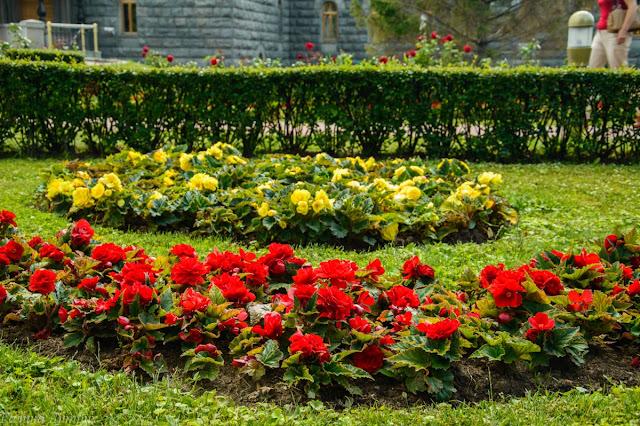 Цветы у Храма Христа Спасителя