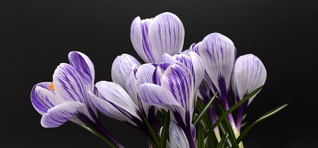 Spring Flowers, Living From Glory To Glory Blog...