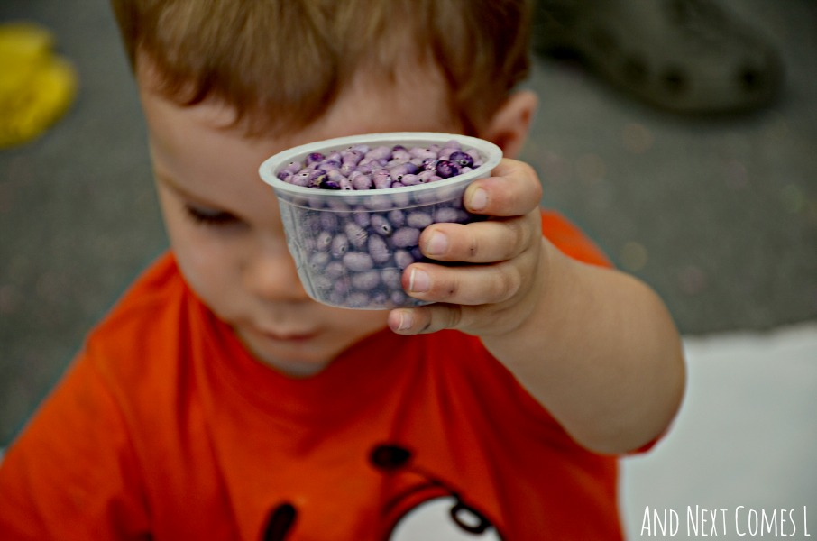 Close up of calming sensory play for kids using lavender scented & dyed beans from And Next Comes L