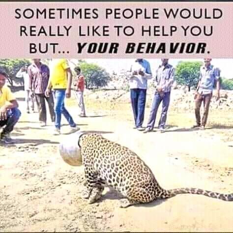 leopard print spot