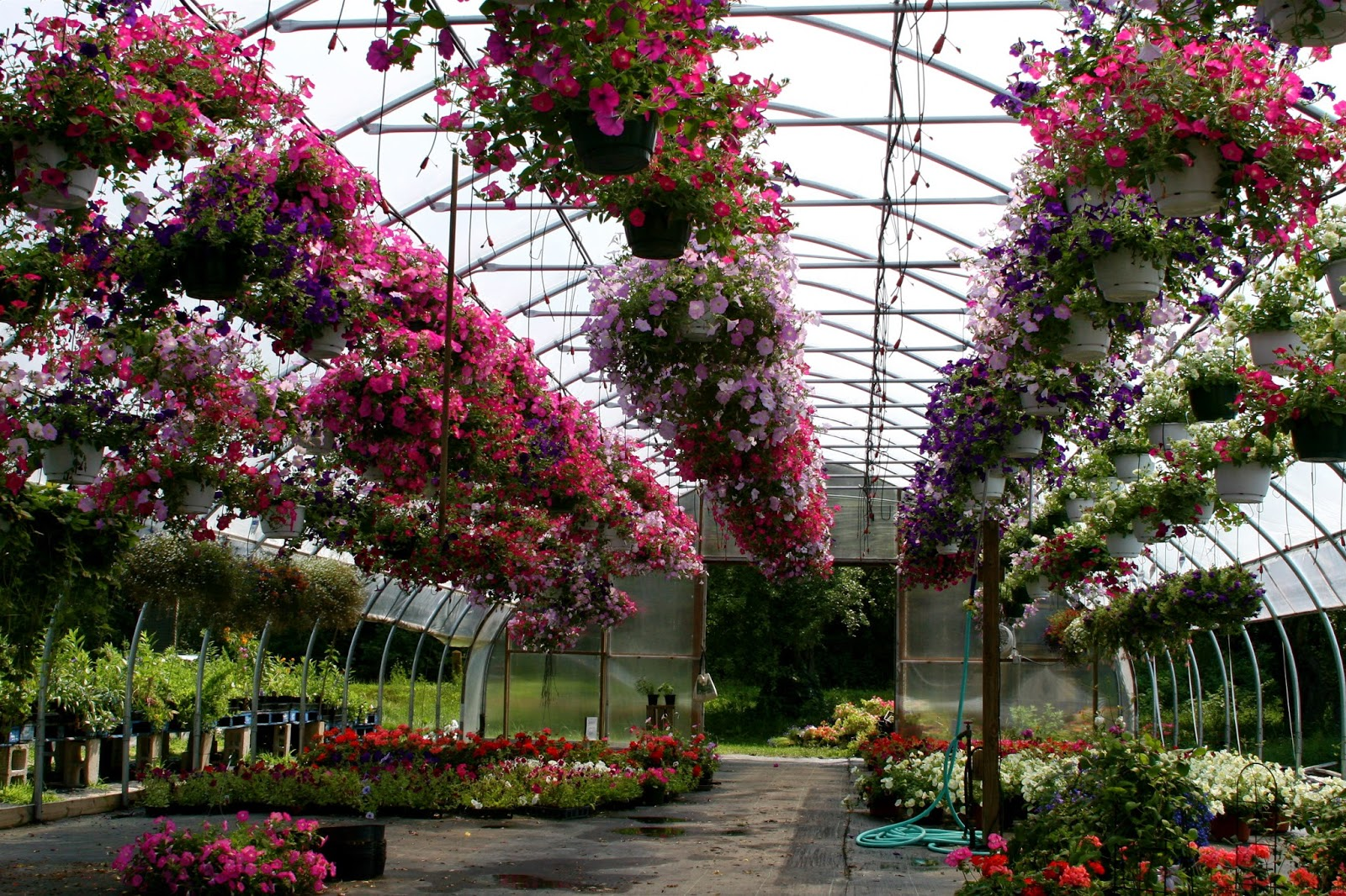 Garden Centre: Sistema De Sanación Natural Tinerfe: Spa Jardín, Huerto