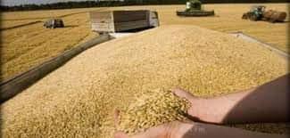 منظمة الأعراف تعلن عن عودة العمل في كل مراكز تجميع وتخزين الحبوب