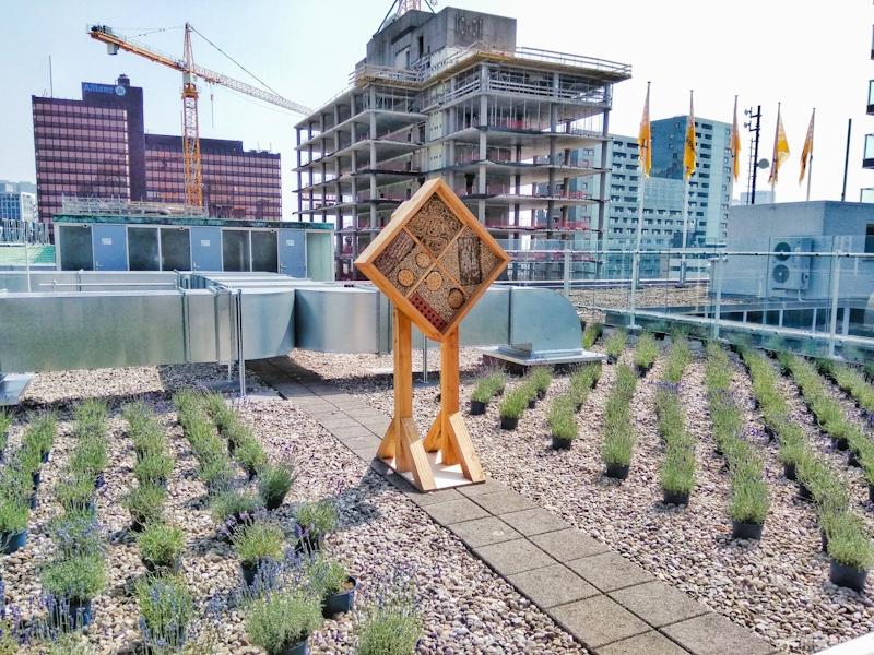Rotterdam Bijenkorf department store roof garden lavender plants bee hive