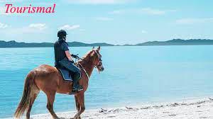 Wisata Kuda Di AS