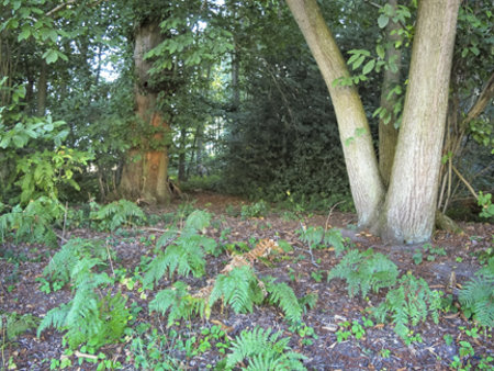 Woods at Well Manor Farm, Well, Nr Long Sutton, Hampshire