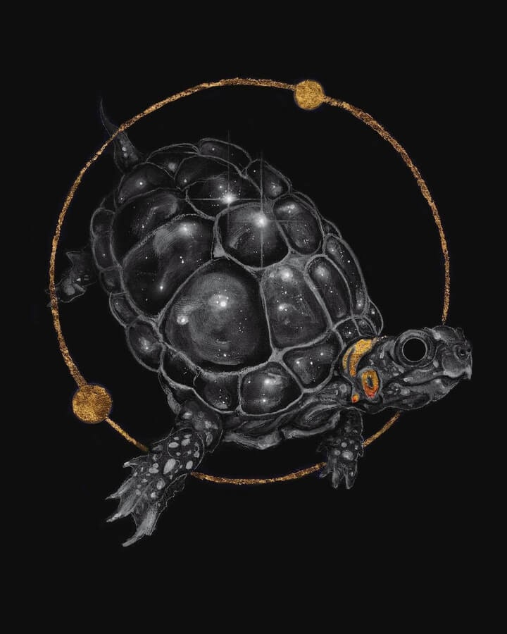 10-The-universe-turtle-Brian-Serway-www-designstack-co