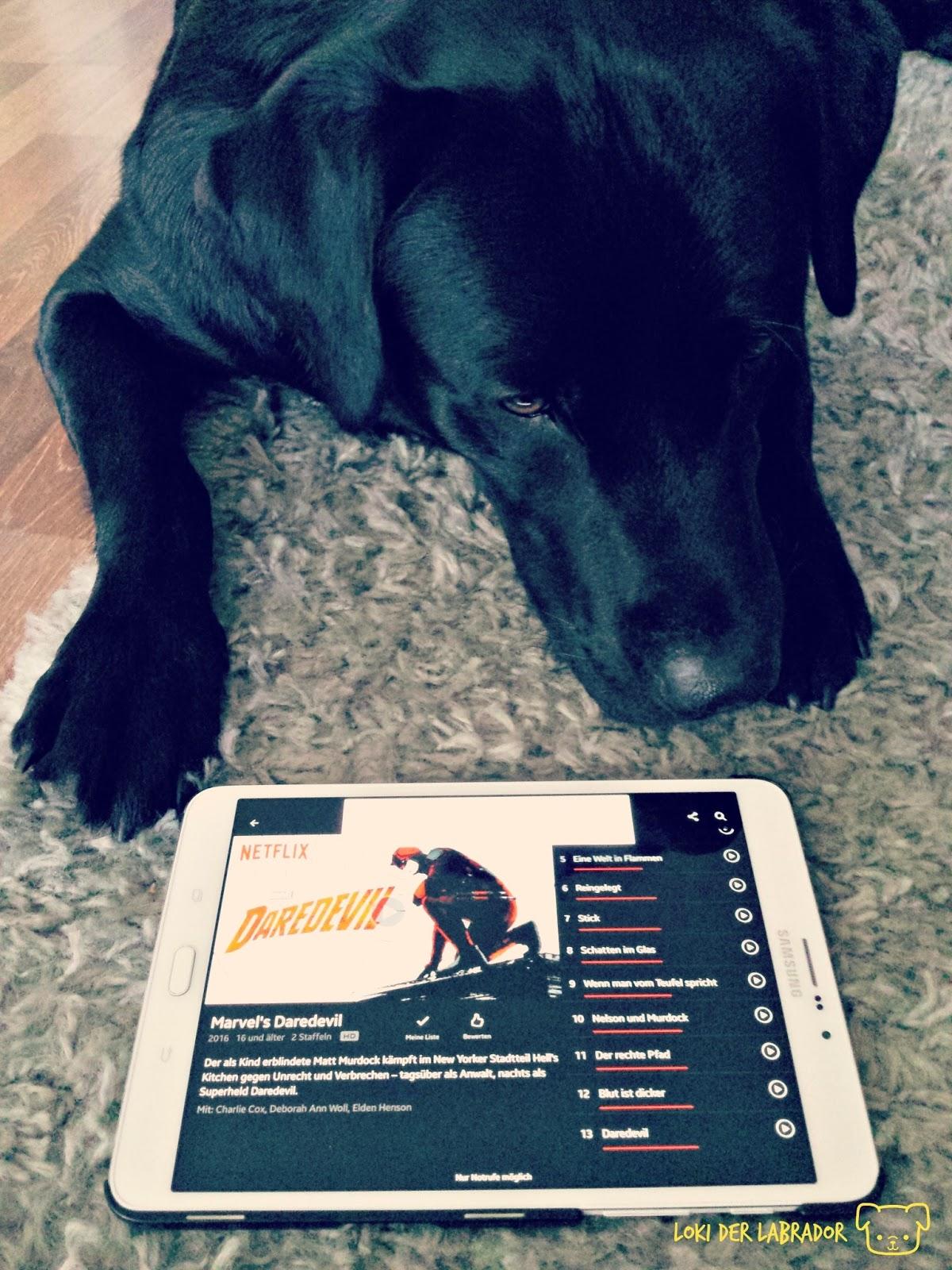 Schwarzer Labrador mit Tablet Daredevil