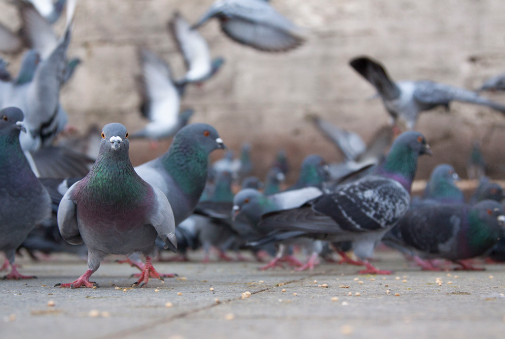How to Keep Pigeons Away from Power Plants
