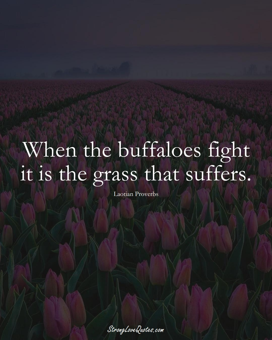 When the buffaloes fight it is the grass that suffers. (Laotian Sayings);  #aVarietyofCulturesSayings