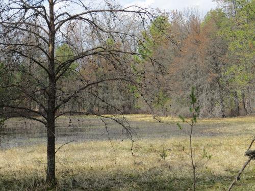 coastal wetland Great Lakes