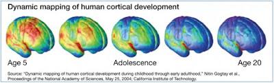 Teori Perkembangan Fisik dan Kognitif pada Masa Remaja