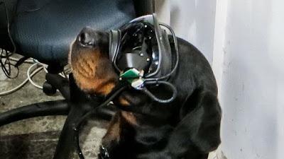 اختبار نظارات الواقع الافتراضي على الكلاب من قبل الجيش الامريكي