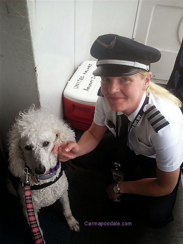 Delta Traveling With Service Dog